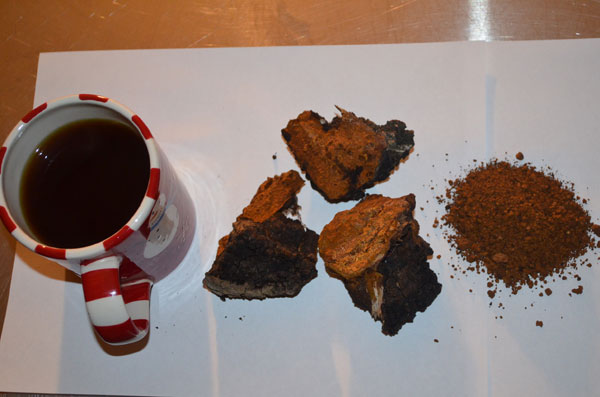 Chaga in raw form, crushed up and as a cup a tea.