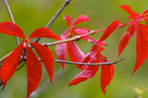 Red seems to be the trendy color of early fall this year. (© jane naliboff photo/Chesterville)