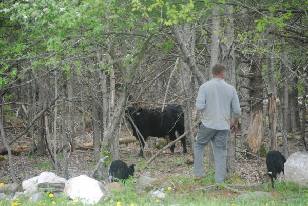 farmer Robby Richards can be found mixing compost, raising small meat chicks, corralling beef with his border collies; Annie and Thunder, tending to his vegetable, herb and flower seedlings, and working in his own large garden.