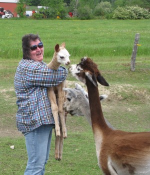 Brenda Simoneau with a cria and its mother.