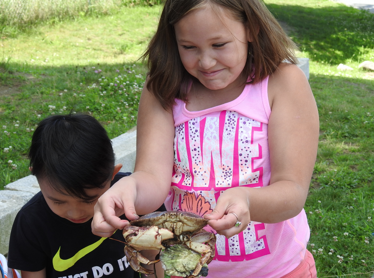 Kaelyn Parlin carefully holds a rock crab, which is holding an oyster from a touch tank brought Mallett School on Monday.