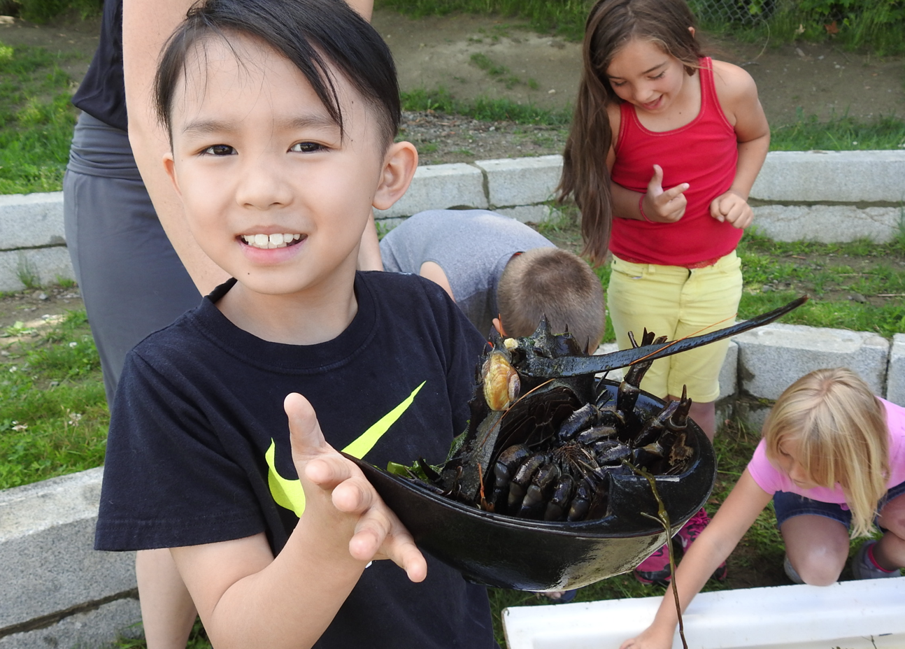 Andy Nguyen holds up a horseshoe crab in a summer learning camp held at Mallett School.