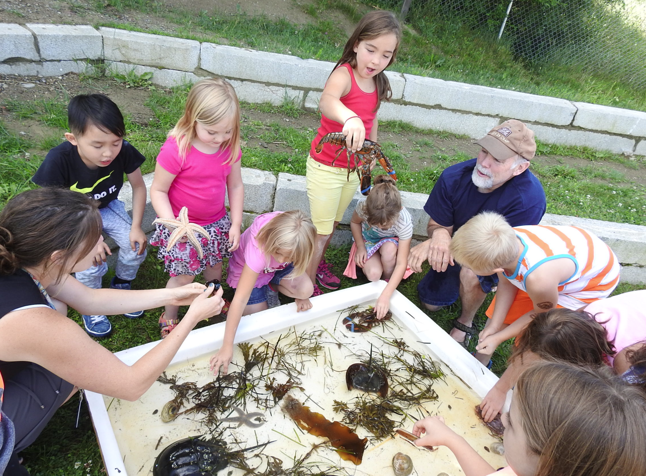 Kindergarten throught second grade students explore a touch tank full of seas creatures on Monday at Mallett School. The activity is part of the extended school summer learning class.