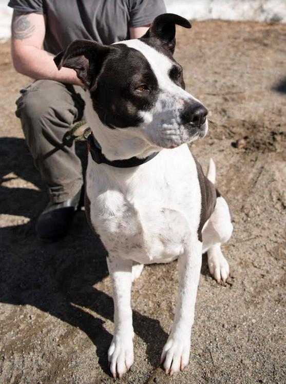 Pets of the Week: Gabby & Vinny | Daily Bulldog