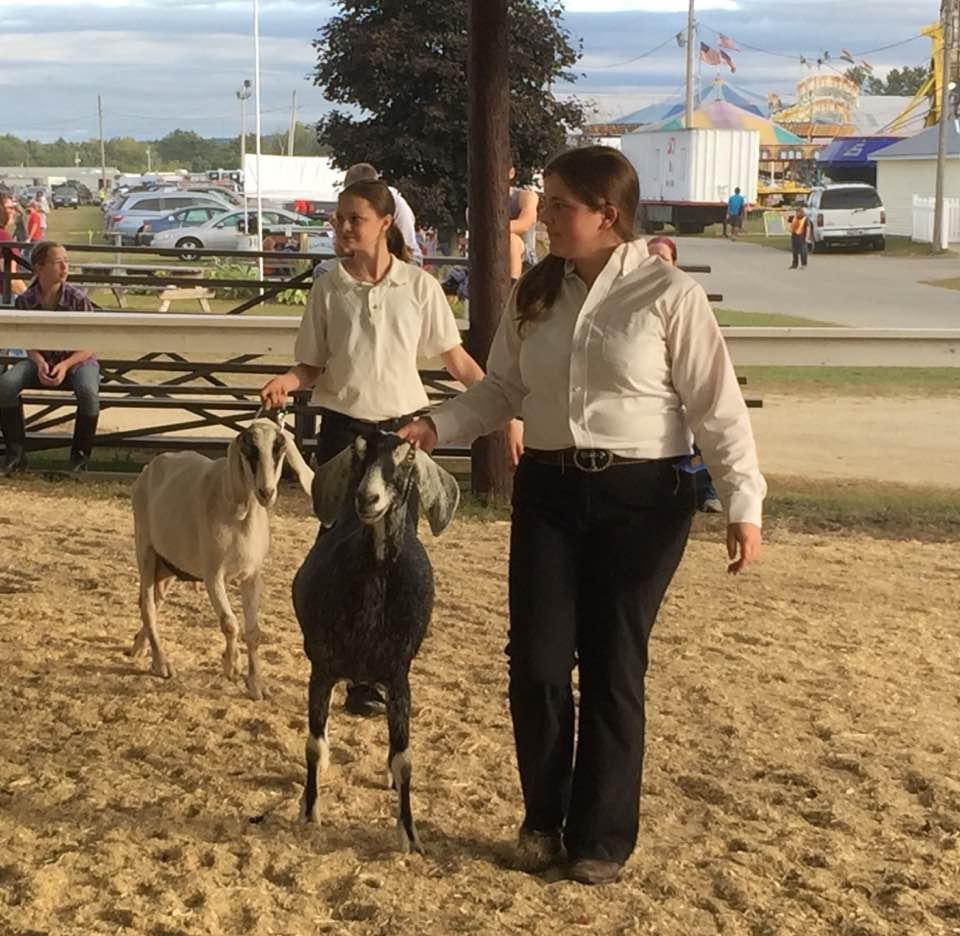 Farmington Fair 4-H Goat Show draws a crowd | Daily Bulldog